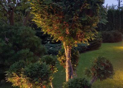 Oświetlenie drzew w ogrodzie – oprawy najazdowe dogruntowe