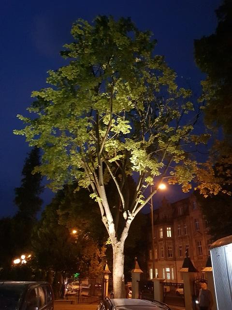 Oświetlenie drzew lampami RGB Smartlight