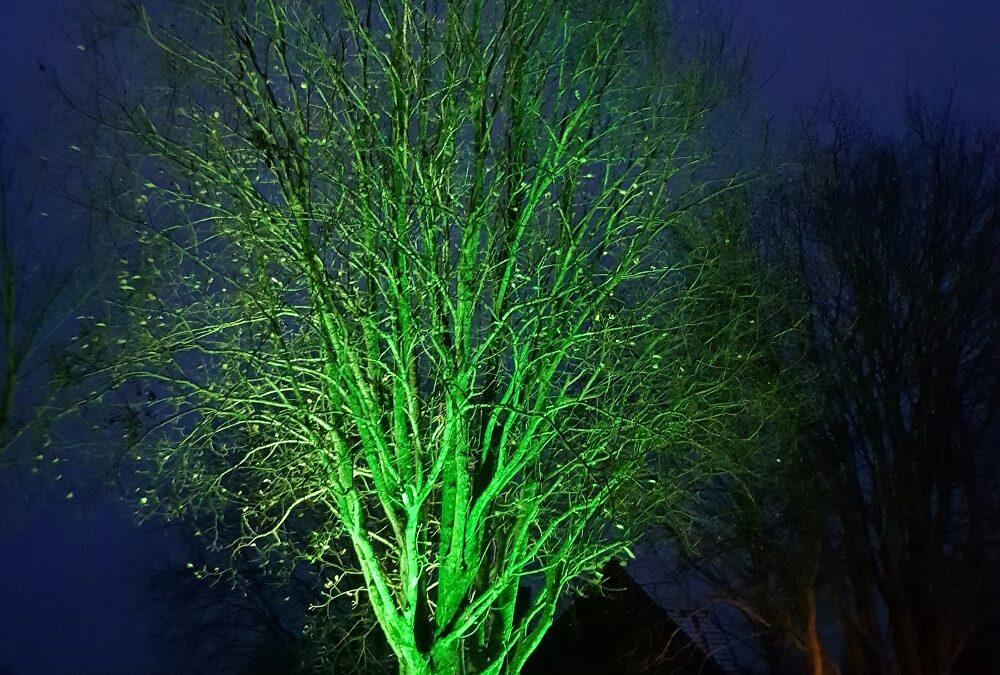 Iluminacja oświetlenie drzewa oprawami Smartlight RGBW